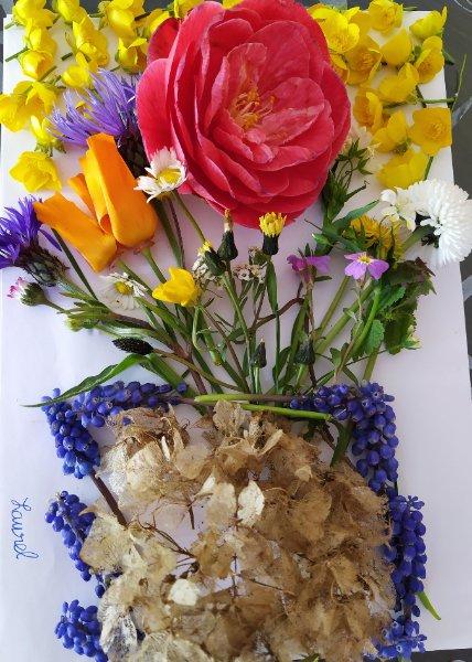 fleurs-laurel